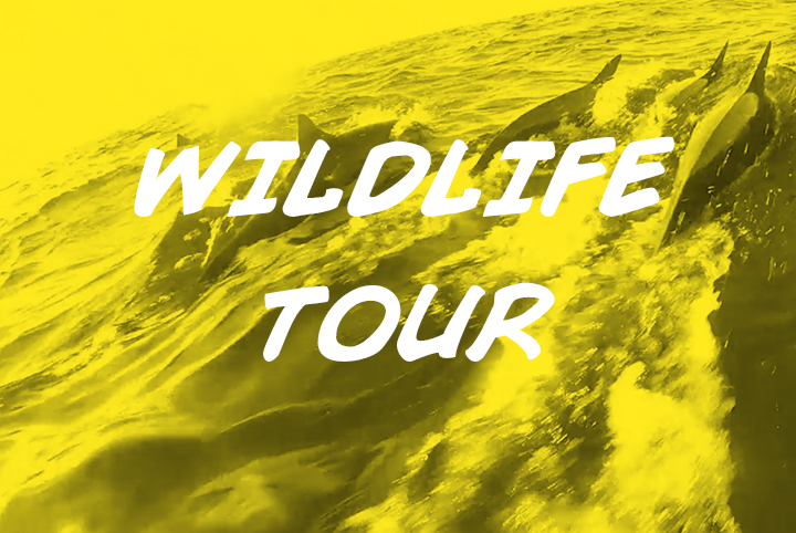 wildlife-tour-nosara-sea-saw-tours-playa-garza-nosara-costa-rica