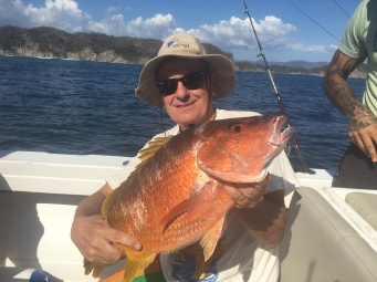 Big yellowtale snapper